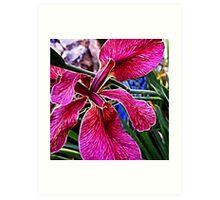 Iris - fractalius Art Print