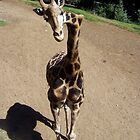 Giraffe with crooked neck by Inga McCullough