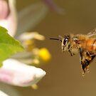 Lemon Blossom Bee-port by Edge-of-dreams