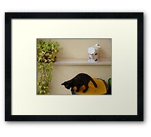 Now How Do I Get Down From Here... Framed Print