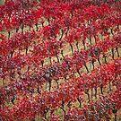 Vineyards in red by Fran0723