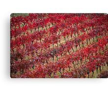 Vineyards in red Canvas Print