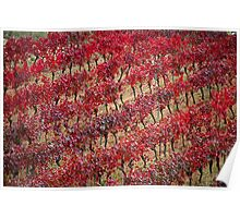 Vineyards in red Poster