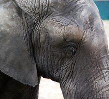 Elephant eye - Zoo Arcachon by Melanie PATRICK