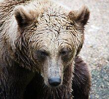 Grizzly Bear - Zoo Arcachon by Melanie PATRICK