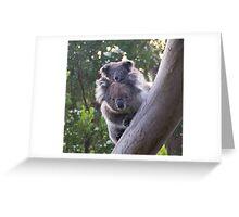 Koala's - Cape Otway, Victoria Greeting Card