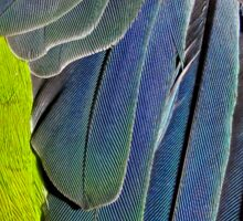 texture and background of colored feathers parrot - plumage Sticker