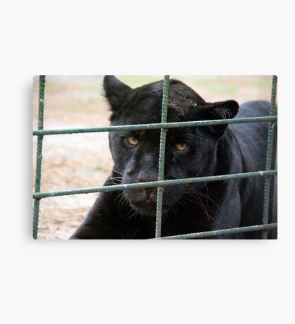 Black Panther - Zoo Arcachon Canvas Print