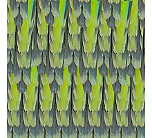texture and background of colorful feathers of a parrot green Photographic Print