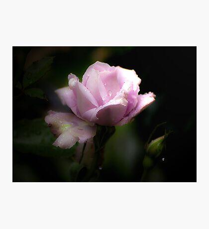 Precious Petal Photographic Print