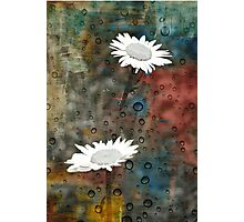 Two For Daisy Photographic Print
