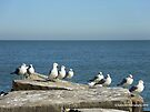 The Simple Life - Seagulls by Barberelli