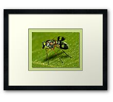 super fly Framed Print