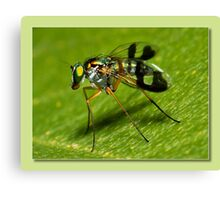 super fly Canvas Print