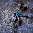 Sapphire Rockmaster by JimMcleod