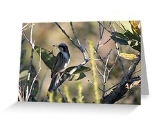 Tawny-crowned Honeyeater Greeting Card