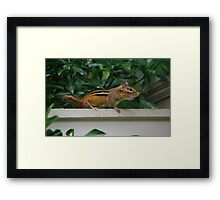 """Wait...what's that""? Framed Print"