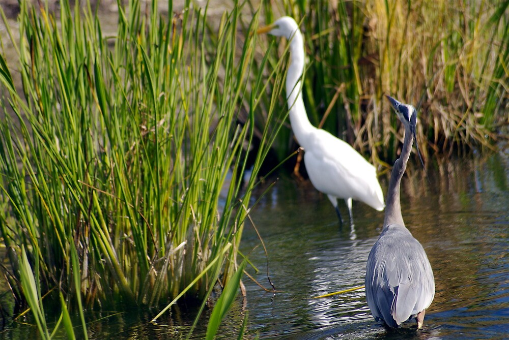 Two Beautiful Herons by humorous