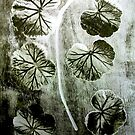 "November's Garden 4 Green - Monoprint by Belinda ""BillyLee"" NYE (Printmaker)"
