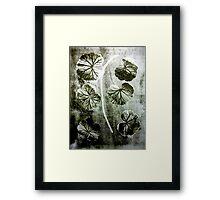November's Garden 4 Green - Monoprint Framed Print