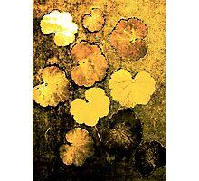 Novembers Garden 5 Yellow - Monoprint Photographic Print