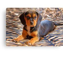 Gracie - A Beagle Cross King Charles Spaniel Canvas Print