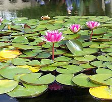 Bright water-lilies by daffodil