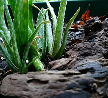 Plants On Porch 4 by DannyHarrison