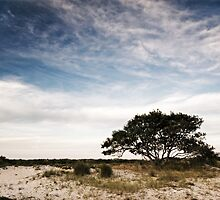 Lonely Tree by Christopher Jamison