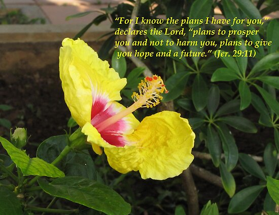 Jeremiah 29:11 by hummingbirds