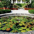 Waterlilies on Isolabella - Lago Maggiore - Italy by Arie Koene