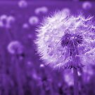 Purple Dandelion Time Peace by Samantha Higgs