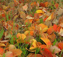 autumn leaves by Mustafa UZEL