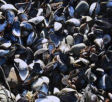 Mussel mania! by sarnia2