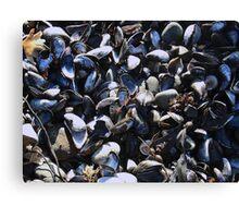 Mussel mania! Canvas Print