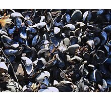 Mussel mania! Photographic Print