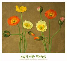 Say It With Flowers by audah