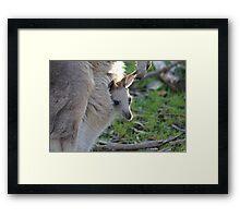 kangaroo baby Framed Print