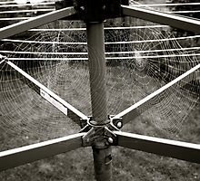 Spider's Webs on the Washing Line - Lindfield by Matthew Floyd