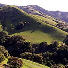 Lucas Valley, Marin County, CA by Rebel Kreklow
