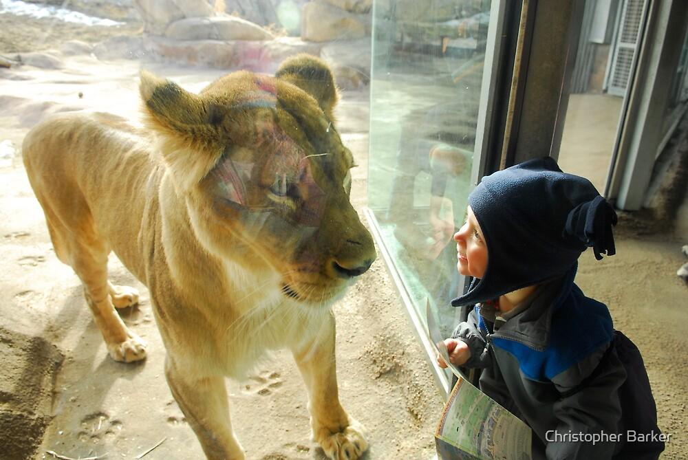 Cayden vs. Lion by Christopher Barker