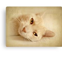 Felis silvestris catus Canvas Print