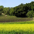 Mustard & Vineyards, Napa Valley, CA by Rebel Kreklow