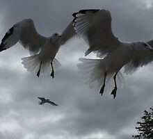 The Birds! by Tracy Faught