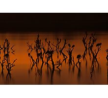 The Ponds Gabarone dusk Photographic Print