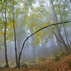 forest autumn foggy by Mustafa UZEL