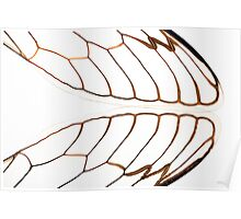 Cicada Wings Poster