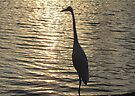 Great White Egret ~ Silhouette  by Kimberly Chadwick