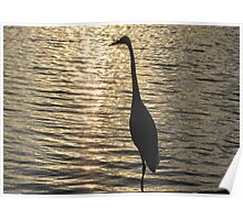 Great White Egret ~ Silhouette  Poster