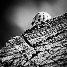Ladybird by Milos Markovic